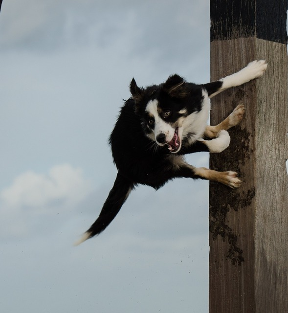 Dog jumps on pole jumping dog funny charisma, travel vacation.
