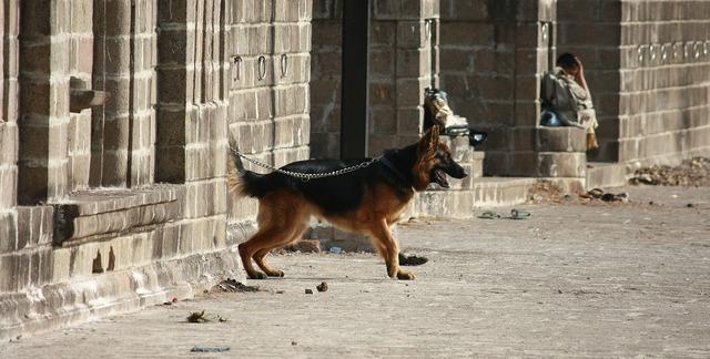 Dog leashed dog leash, animals.