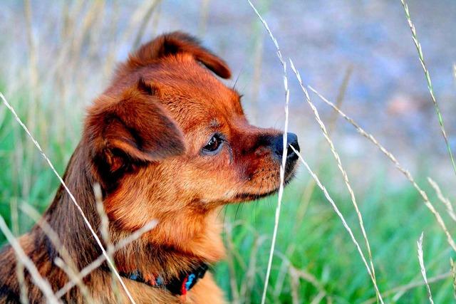 Dog meadow dog on meadow, animals.