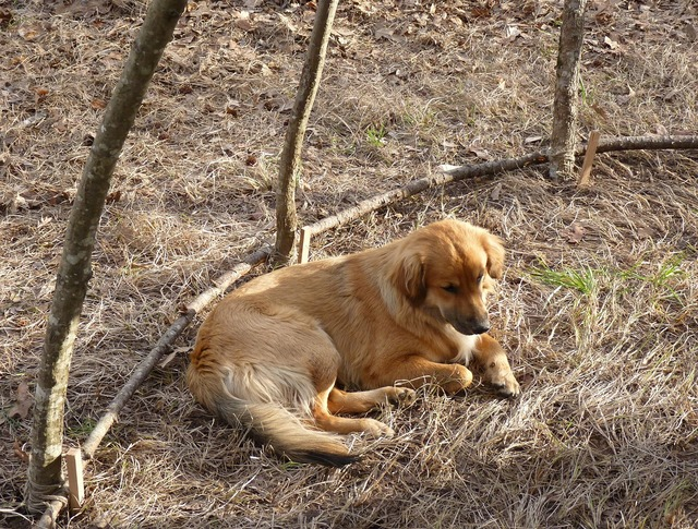 Dog meditate sweat lodge, animals.