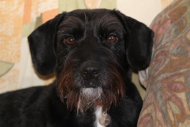 Dog mestizo young, animals.