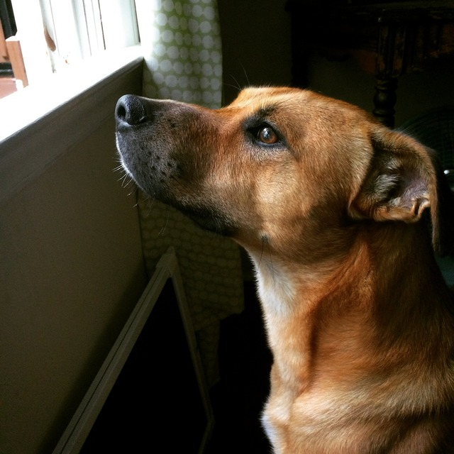 Dog mut canine, animals.