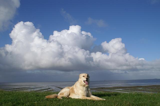 Dog north sea dike, animals.
