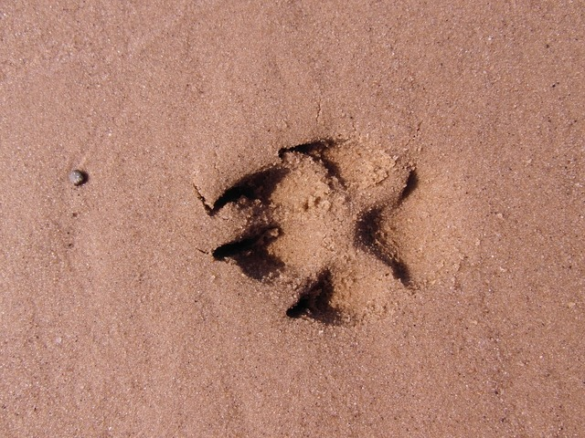 Dog paw footprint paw, travel vacation.