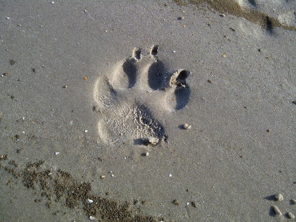 Dog paw north sea watts.