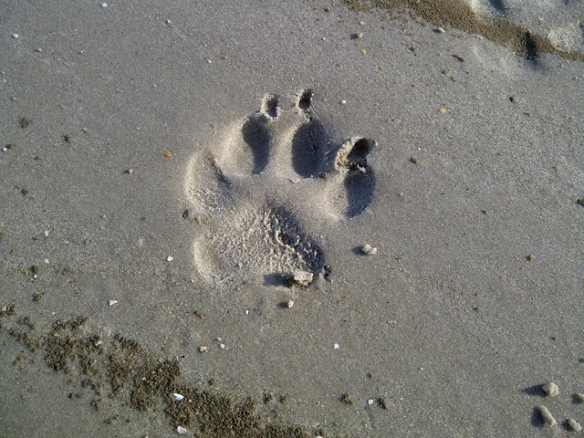 Dog paw north sea watts.