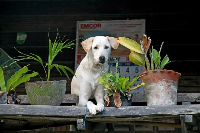 Dog pet canine, animals.