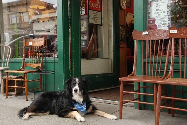 Dog pet shop, animals.