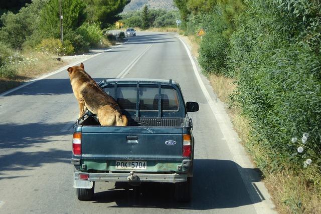 Dog pick up traffic, animals.