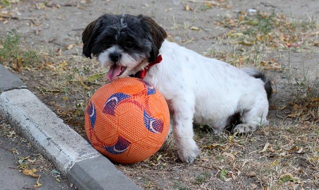 Dog play ball, animals.