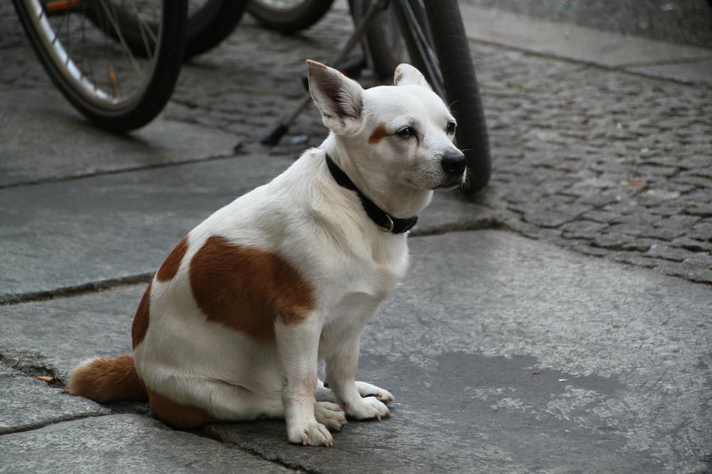 Dog portrait animal portrait, animals.
