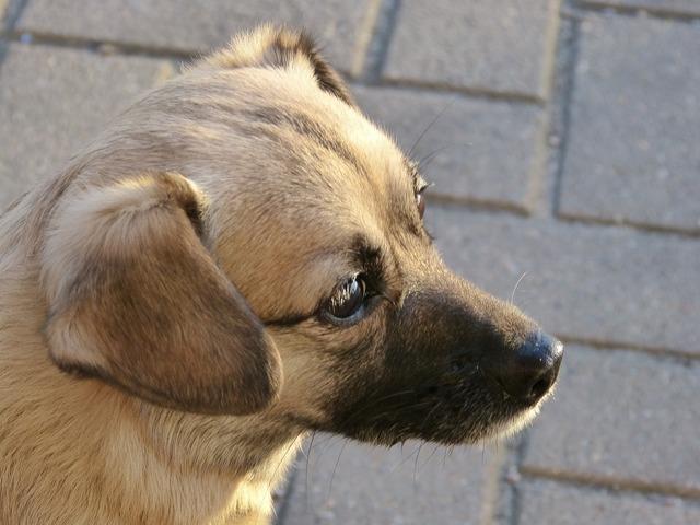 Dog portrait pet, animals.