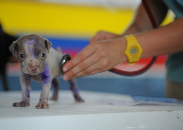 Dog puppy canine, animals.