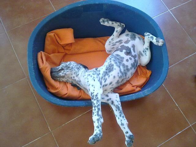 Dog puppy pet, animals.