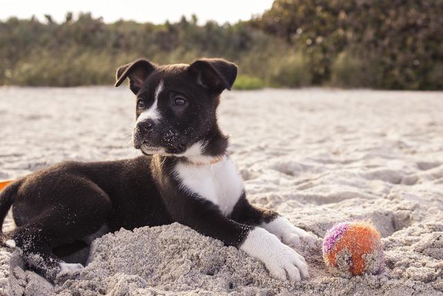 Dog puppy playing, animals.