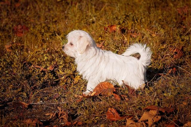 Dog puppy young dog, animals.