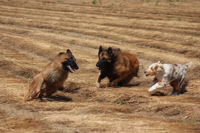Dog race game, animals.