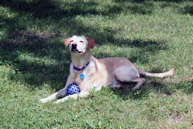 Dog rescue ball, animals.
