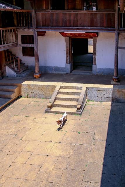 Dog saw courtyard, animals.