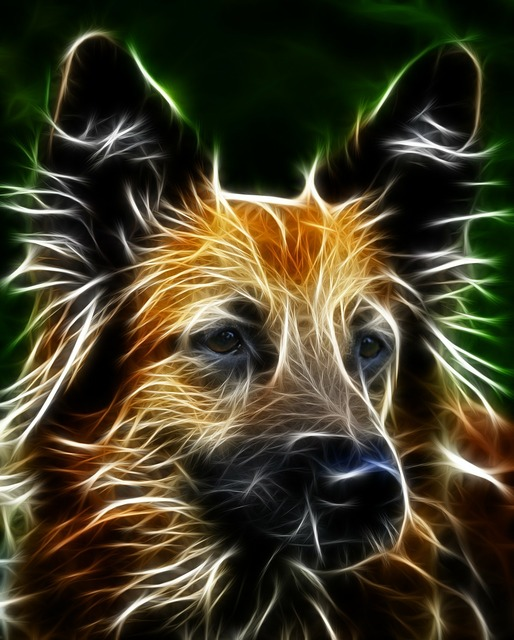 Dog schäfer dog image editing, animals.