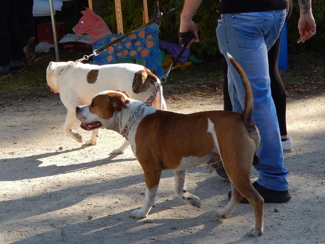 Dog show dogs parade, animals.