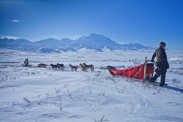 Dog sled snow wilderness.