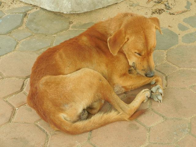 Dog sleeping animal, animals.