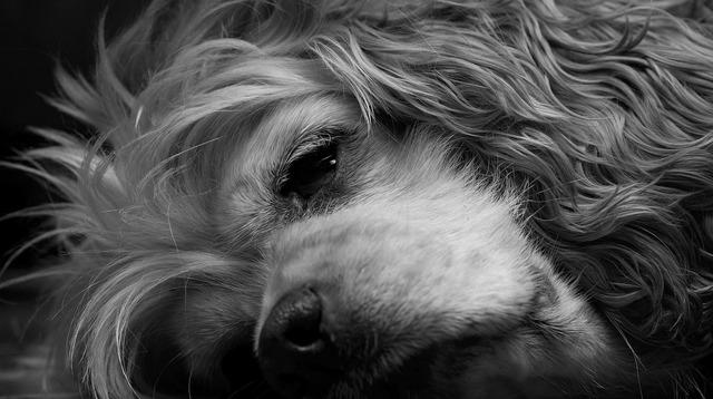 Dog sleeping black and white, animals.