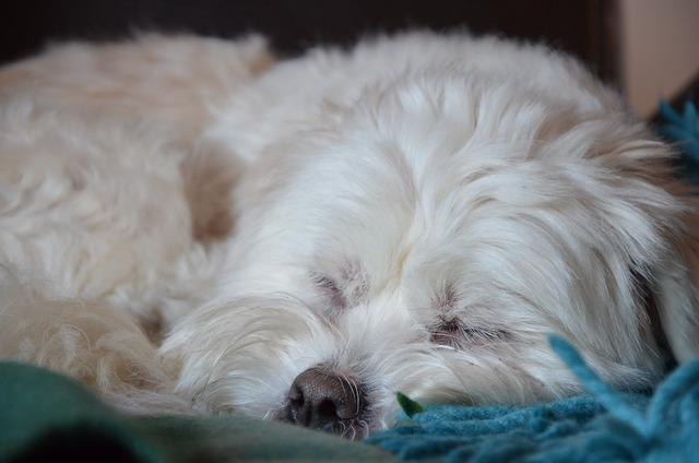 Dog sleeping cute, animals.