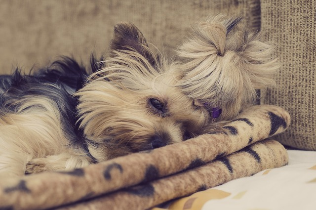 Dog sleeping pet, animals.