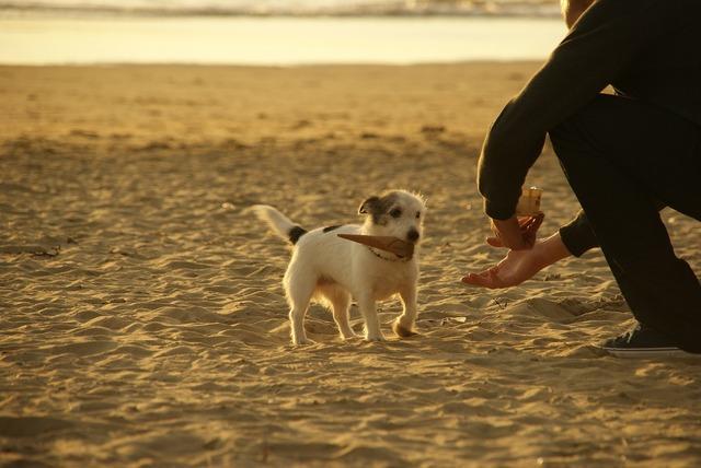 Dog small cute, animals.