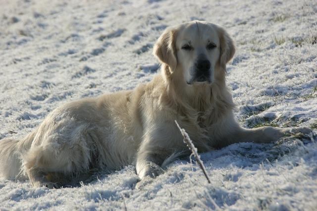 Dog snow concerns, animals.