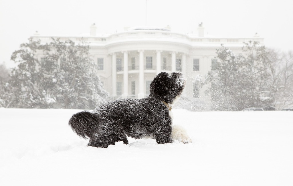 Dog snow white house, animals.