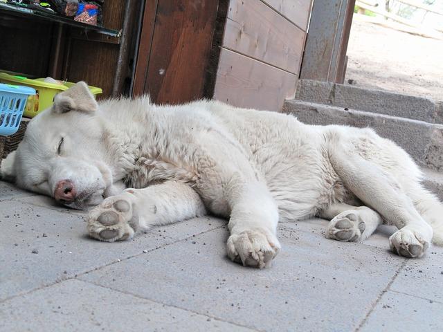 Dog strays hybrid, animals.