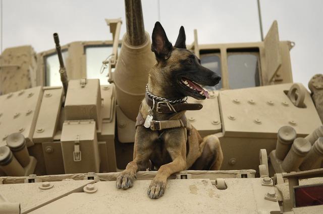 Dog tank army, animals.