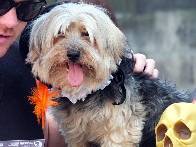 Dog terrier fur, animals.
