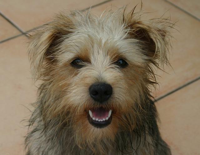 Dog terrier mix, animals.