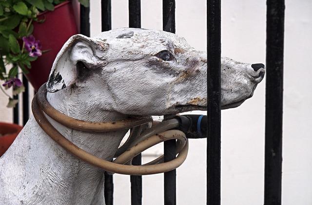 Dog tether leash, animals.