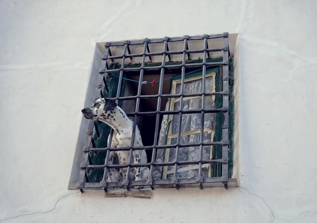 Dog the lone grille, animals.