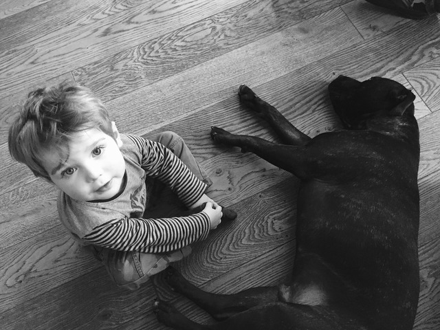 Dog toddler black and white, animals.