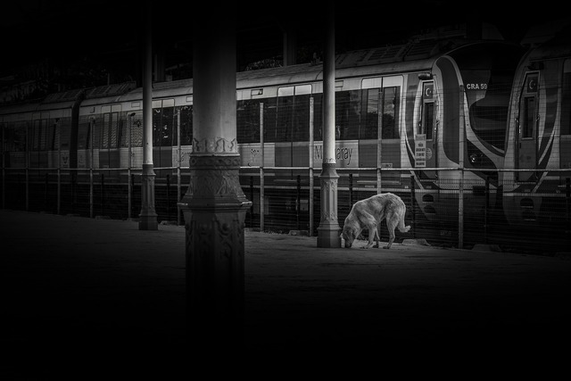 Dog train station, animals.