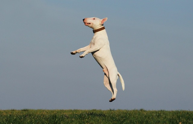 Dog training joy, animals.