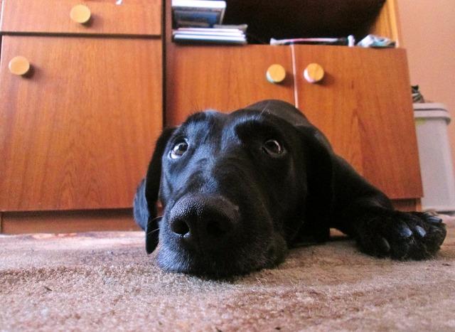 Dog view sadness, animals.