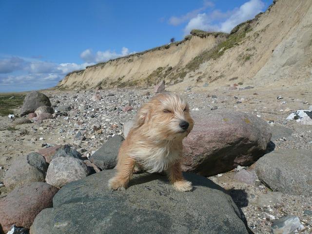 Dog wind north sea, animals.