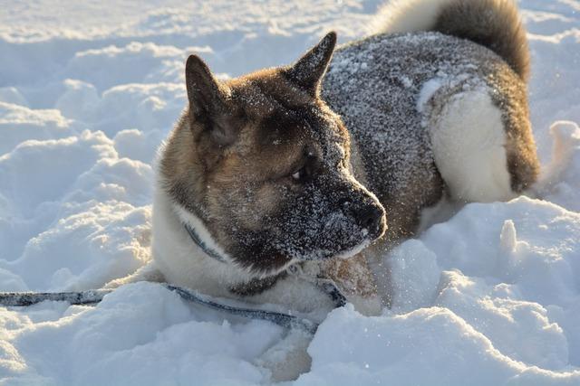 Dog winter pet, animals.