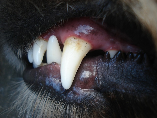 Dogs baring tooth, animals.