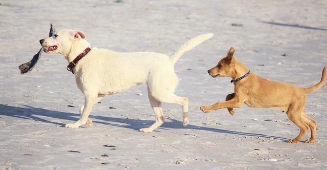 Dogs beach fun, travel vacation.
