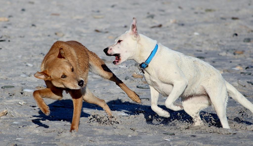 Dogs beach romp, travel vacation.