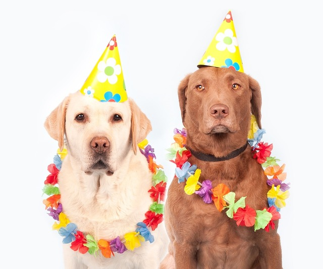 Dogs carnival humor, animals.