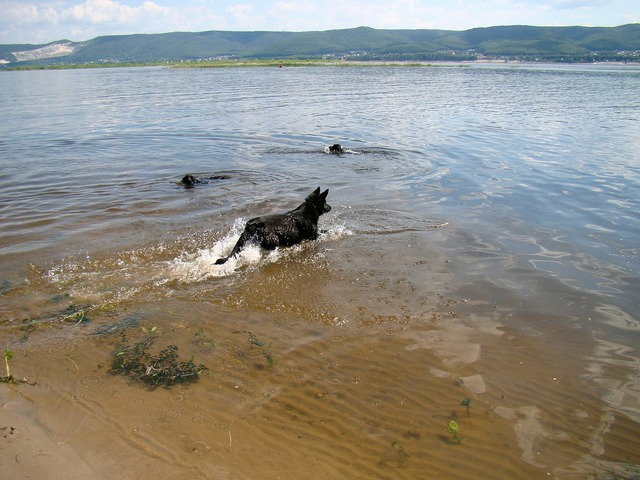 Dogs float river.